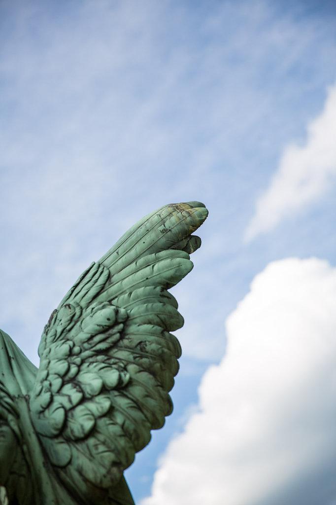 Angel's wing